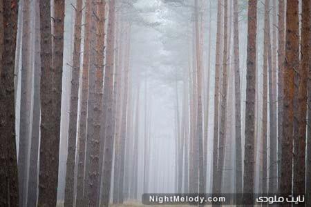 جنگلی مه گرفته در شرق آلمان