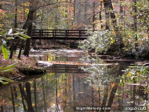 پل های چوبی و طبیعت