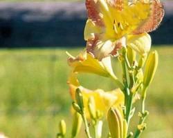ترفند هایی برای باغبانی آسان در خانه
