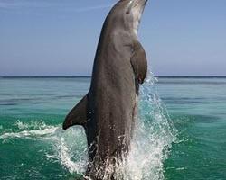 دلفینها، پادشاه حافظه در قلمرو حیوانات