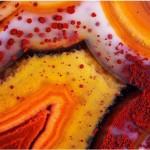 برندگان رقابت عکاسی میکروسکوپی
