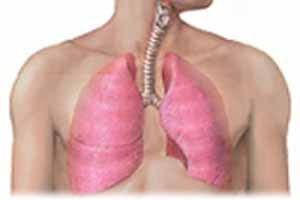how-to-clean-and-wash-the-liver-and-lungs