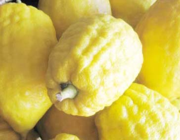 میوه ترنج
