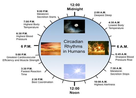 ساعت بدن