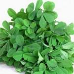 درمان سرفه با داروهای گیاهی