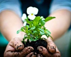 همسر شما هم عاشق باغبانی است؟