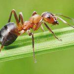 دانستنی هایی شگفت آور درباره مورچه ها