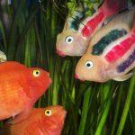 آیا ماهیها هم احساس دارند؟