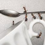 راههای طبیعی برای دفع مورچه ها از آشپزخانه
