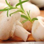 فواید قارچ خوراکی و بهترین روش پخت آن