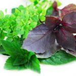 درمان مسمومیت غذایی با طب سنتی