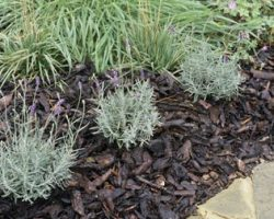 روش هایی برای صرفه جویی آب در حیاط و باغچه