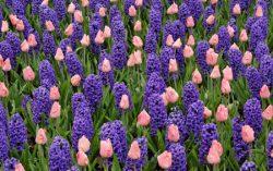 روش نگهداری از گل ها در خانه