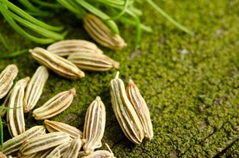 با خواص معجزه آسای گیاه رازیانه آشنا شوید