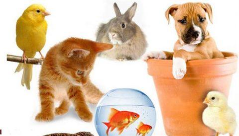 به چه دلیل نگهداری حیوانات خانگی اشتباه و غیر اخلاقی است؟