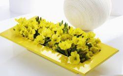 آشنایی با خواص و فواید استفاده از روغن گل پامچال