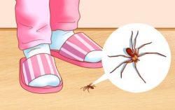 راهکارهایی برای از بین بردن حشرات خانگی