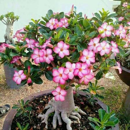 دانستنی هایی راجب نحوه نگهداری گل و گیاهان آپارتمانی