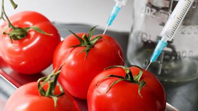 استفاده از غذاهای اصلاح شده ژنتیکی چه معایب و مزایایی دارد؟
