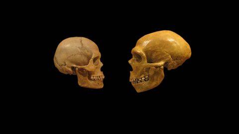 انسان های اولیه در کجا زندگی می کردند؟