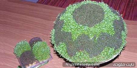 آموزش روش کاشت سبزه دورنگ عید در کمترین زمان