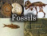 فسیل یا سنگواره چیست؟