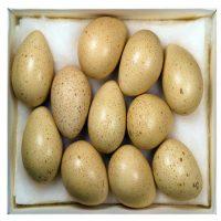 با خواص و فواید تخم کبک آشنا شوید
