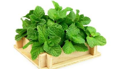 آشنایی با گیاهانی که برای بدن خاصیت التیام بخش دارند