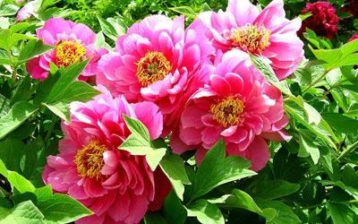 با گیاهان سمی و آسیب های آنها آشنا شوید..!