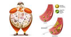 برای کم کردن کلسترول خون کدام مواد غذایی مفیدند؟