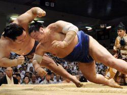 در رابطه با ورزش رزمی سومو چه می دانید..!